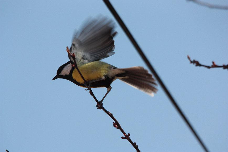 Les oiseaux des jardins de Gagny-Chelles : Partie 1 - Les ...
